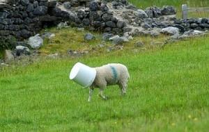 A stupid sheep at Gordale Scar  Flickr - Photo Sharing! - Windows Internet Expl_2014-10-16_18-42-07